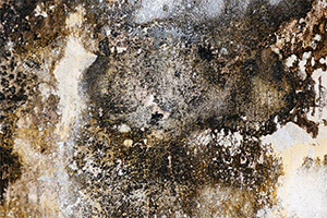 Use a remediation company that hires a third-party mold assessor