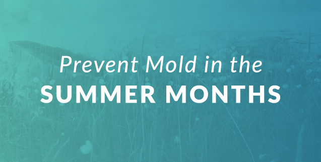 3 Steps to Prevent Mold Growth in the Summer