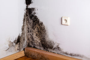 Black mold can grow anywhere in your home