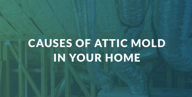 Causes of Attic Mold in Your Home