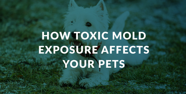 How Toxic Mold Exposure Affects Your Pets