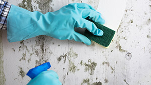 A person using vinegar and baking soda to clean up mold.