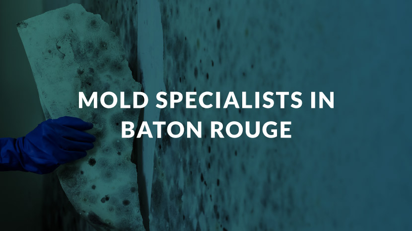 Mold Specialists in Baton Rouge