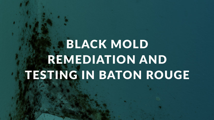 Black Mold Remediation and Testing in Baton Rouge