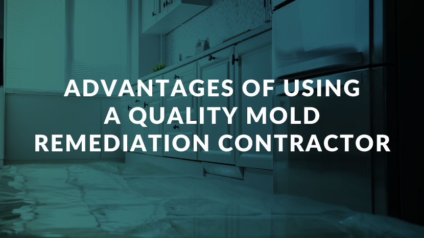 Advantages of Using a Quality Mold Remediation Contractor