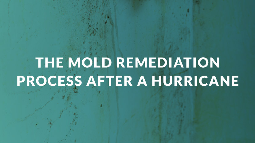 The Mold Remediation Process After a Hurricane