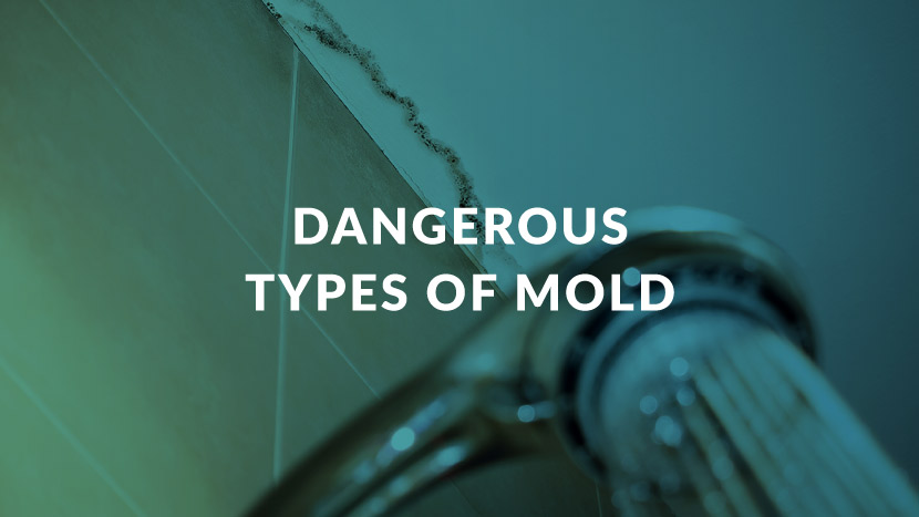 Dangerous Types of Mold